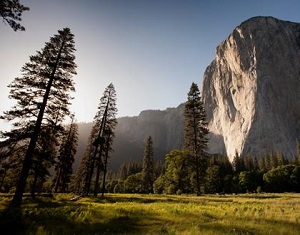 Photo of trees and a big rock mesa at Yosemite National Park