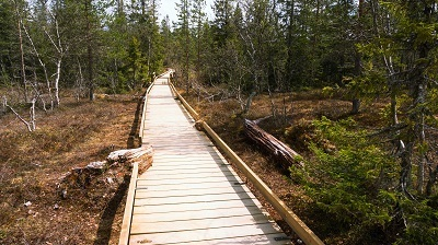 A picture of the Fjulufället national park hiking trail